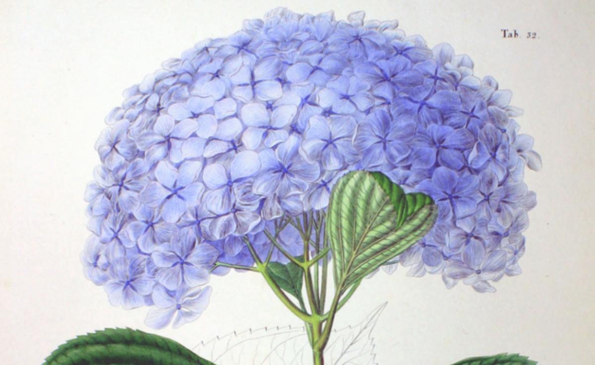 Japanse Flora