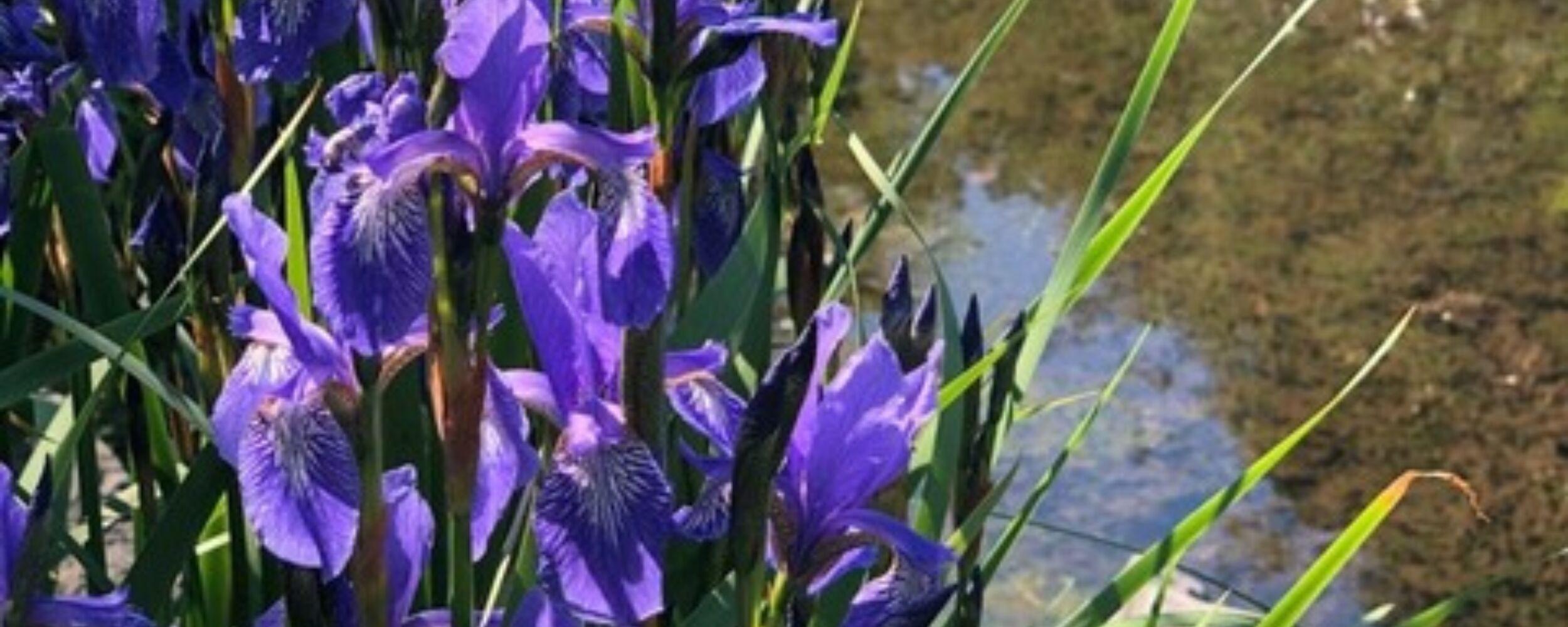 Japandag Hortus Overzee