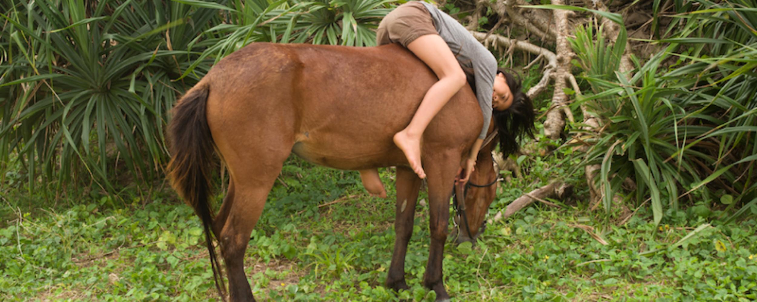 T T  Het Paard In De Kalebas
