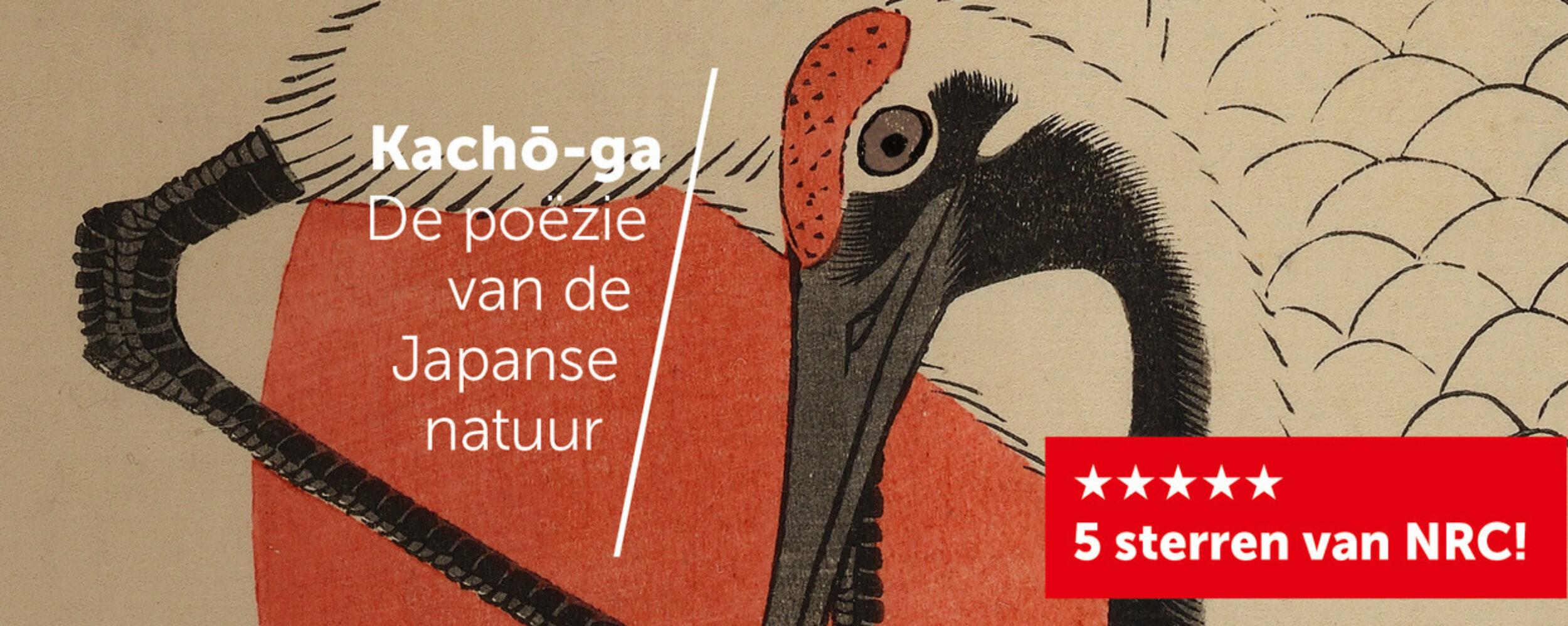 Kachoga Header Facebook 5Sterren Xl